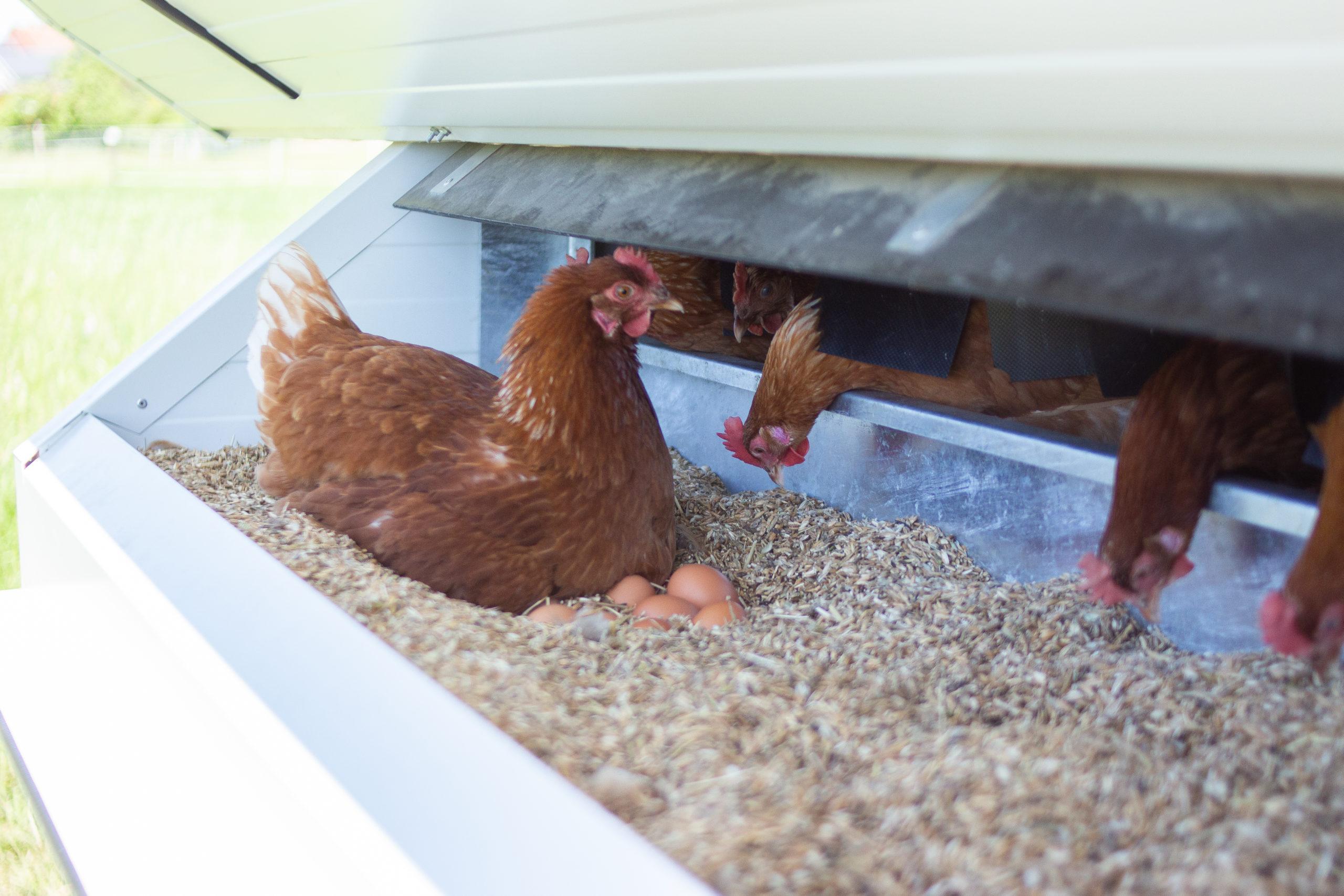 frische Eier Hühnermobil Hartwich Mitterteich